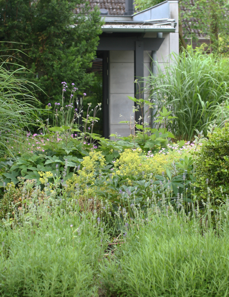 IMG_2920_garden